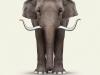 Elephant-Art-Dali