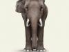 Elephant-Art Van-Gogh