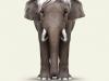 Elephant-Art Warhol