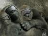 Al Ain Zoo - Gorilla