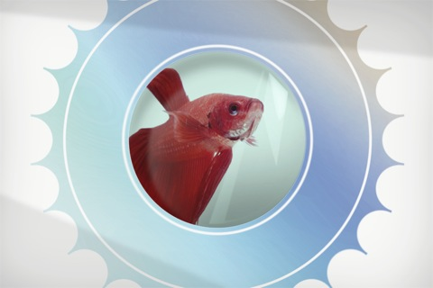 401k_goldfish_box_open.jpg